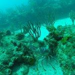 Giant Lavendar Lobster!