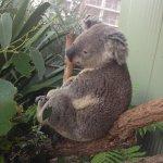 Koala !!
