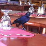 Annoying birds on the restaurant table, once stole my toast!