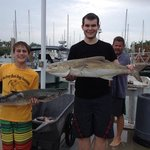 cobia and big king