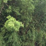 Rainforest around Casa Grande Mountain Retreat