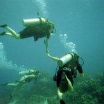 under the cayman sea