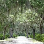 Spanish Moss Adds to the Somber Atmosphere