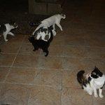 Une dizaine de chats dans l'hôtel