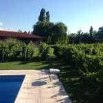 pool and vines