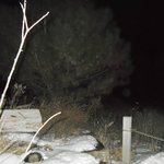Orb at lower right side of tree @ Poor farm site.
