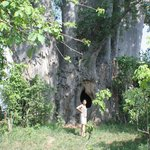 Famous Baobab in Gonarezhou