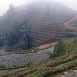 The Rice Terraces at Cat Cat Village