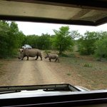 Rhinos at Hluhluwe