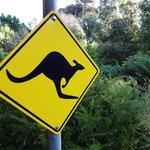 Australian zone