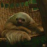 Super cute sloth