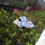 Este bañador usado estuvo hay toda la semana en el seto de la terraza, y allí se quedo ...