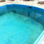 Piscina suja2