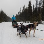 Exciting Tour with Kingmik Dog Sled Tours & Guide Cody