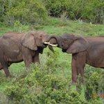 elephant antics
