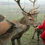 Feeding of the deer