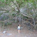 Praia do Bode: natureza combinada