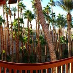Magnificent, spring-fed oasis garden on the grounds of the Furnace Creek Inn.