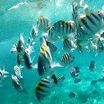 """Snorkel """"Mexico Rocks"""""""
