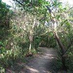 Paths around grounds