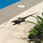 A friendly visitor to the pool