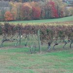Vino 301 Wine Concierge - Tours