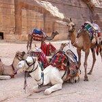 Petra transportation