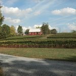 Mountainview Region - Serperent Ridge vineyards and barn