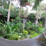 Atrium Garden, hammock in the foreground!