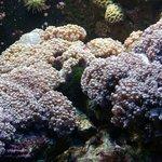 Batu karang