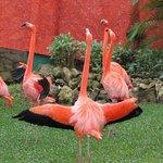 flamingoes exercising