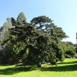 gramados e árvores lindos