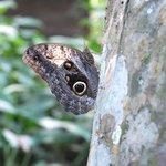 Butterfly near rooms