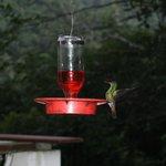 Hummingbird at restaurant