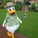 Hawaiian Donald