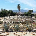 One of the cactus circles.