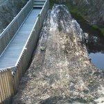 100,000 year old kauri log