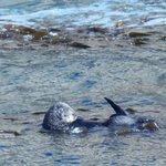 Sea Otter Coal Miners Chute