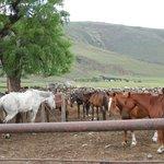 Los caballos de la estancia