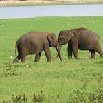 Two elephants having a tussle