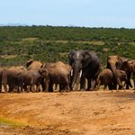 Addo National Park elephants
