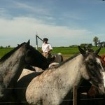 Horses in the Pampas