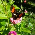 mariposasen flores del deck (cercano a la pileta)