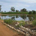 Adjacent vineyards