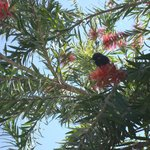 Humming bird in the trees in the resort