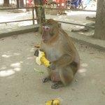 Monkeys in the National Park.
