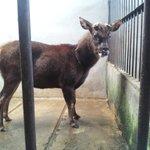 Really, 花鹿米民宿 has 鹿