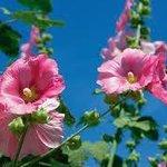 magnifiques fleurs