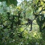 Monos en el paseo de tracking