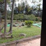 Campo de mini-golfe